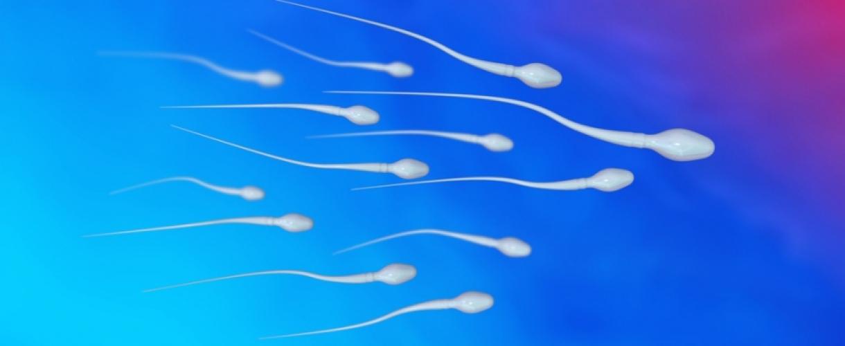 Как созревает сперма