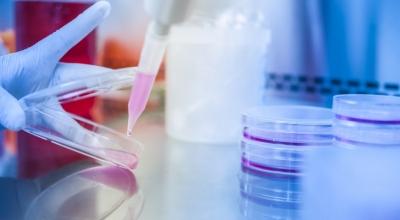 Исследование крови на наследственные дефекты гемостаза (мутации гемостаза): полиморфизм генов системы гемостаза
