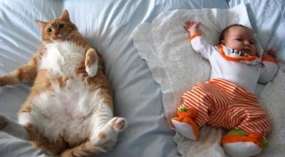 Животные в доме и беременность